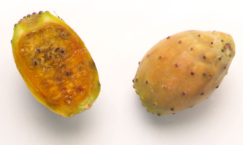 Pricky pear; Indian fig; Barbary fig