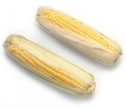 Corn; Maize