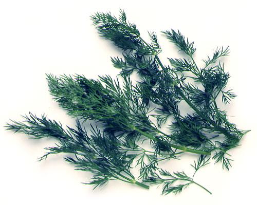 Fennel (Leaf)