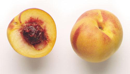 Nectarina